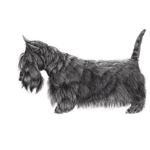 skotsk terrier ub - Herre premium T-shirt