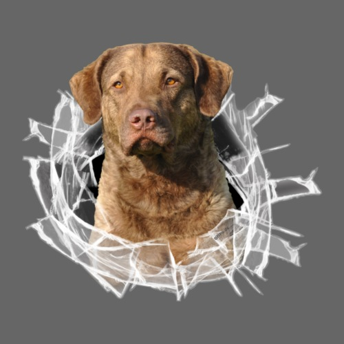 Chesapeake-Bay-Retriever im Glasloch - Männer Premium T-Shirt