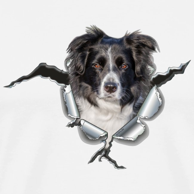 Border Collie im *Metall-Loch*