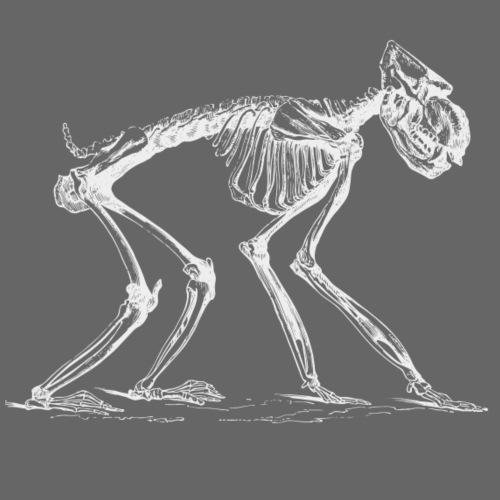 Skelett Pavian - Männer Premium T-Shirt