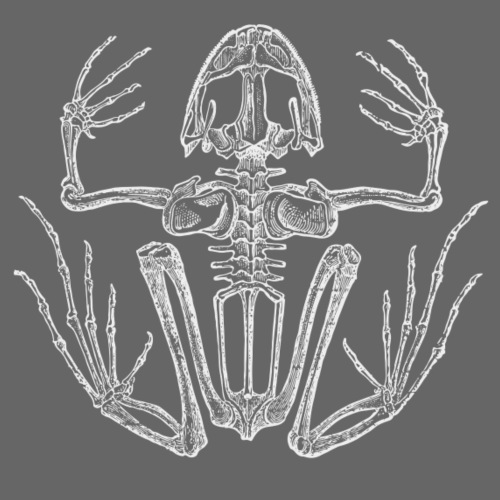 Frog Skeleton - Männer Premium T-Shirt