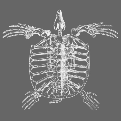 Turtle Skeleton - Männer Premium T-Shirt