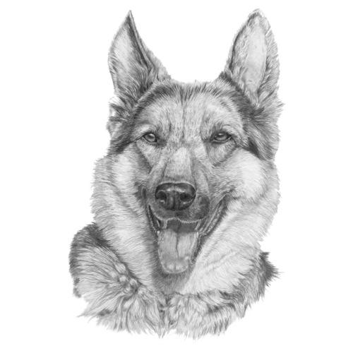 Schæfer German shepherd - Herre premium T-shirt