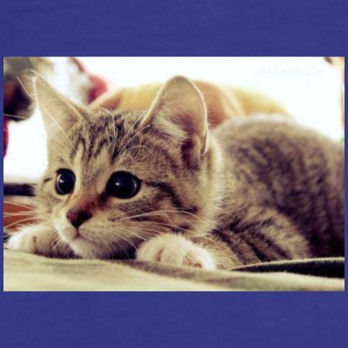 gato tierno - Camiseta premium hombre