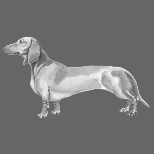 Dachshund smooth haired - Herre premium T-shirt