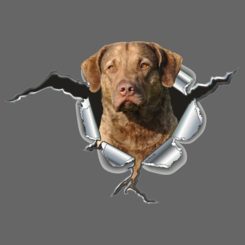 Chesapeake-Bay-Retriever im Metall-Loch - Männer Premium T-Shirt
