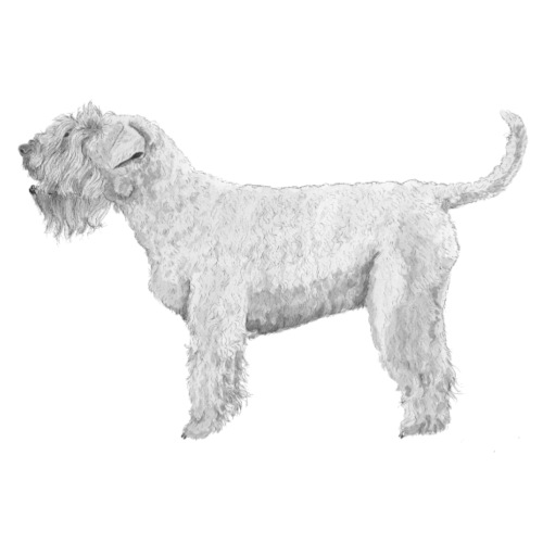Soft Coated Wheaten Terrier - Herre premium T-shirt
