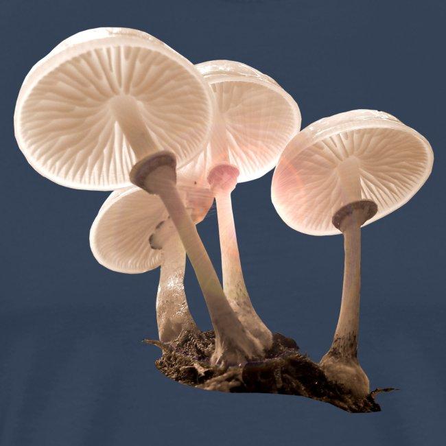 Pilze Herbst Mushrooms