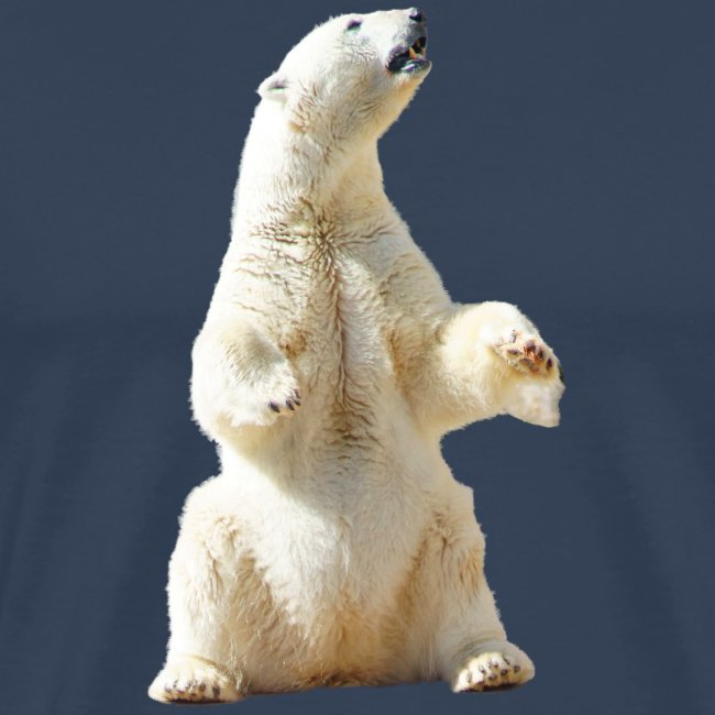 polar 1089266