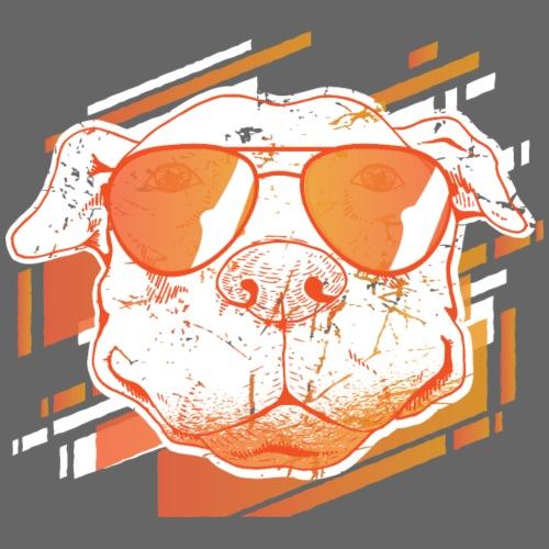 Pitbull mit Sonnenbrille