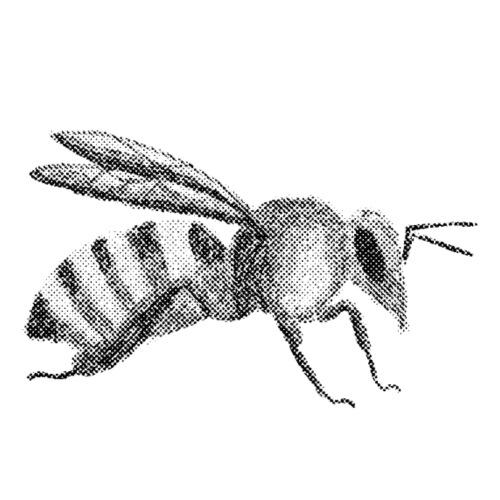 Biene - Männer Premium T-Shirt
