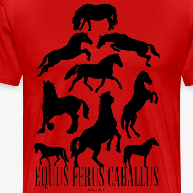 Equus Ferus Caballus Black
