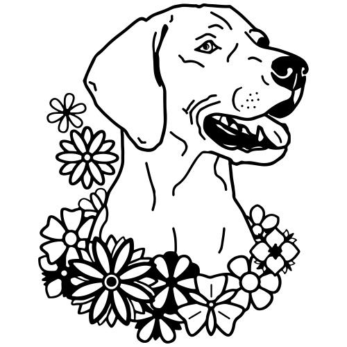 WeimaranerFlower 2020 01- www.dog-power.nl © - Mannen Premium T-shirt