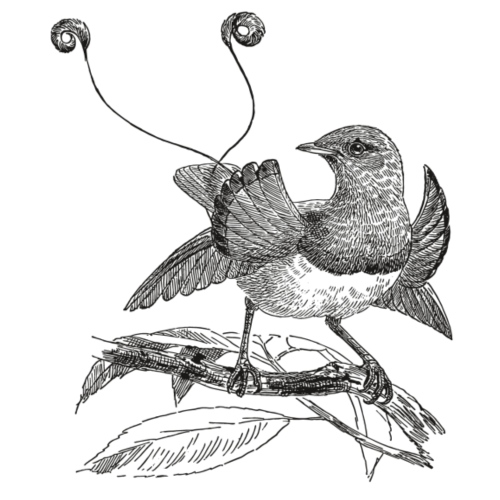 Paradiesvogel - Männer Premium T-Shirt