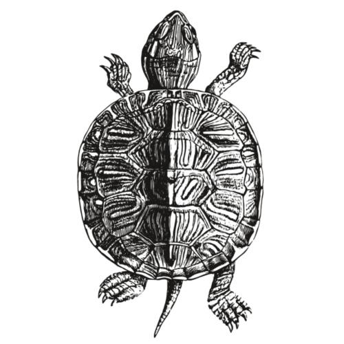 Little Turtle - Männer Premium T-Shirt