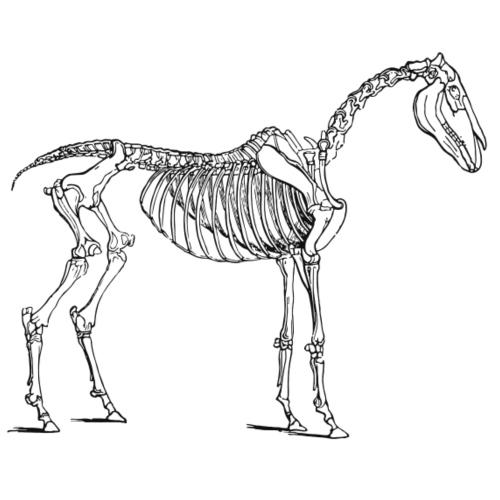 Skeleton Horse - Männer Premium T-Shirt