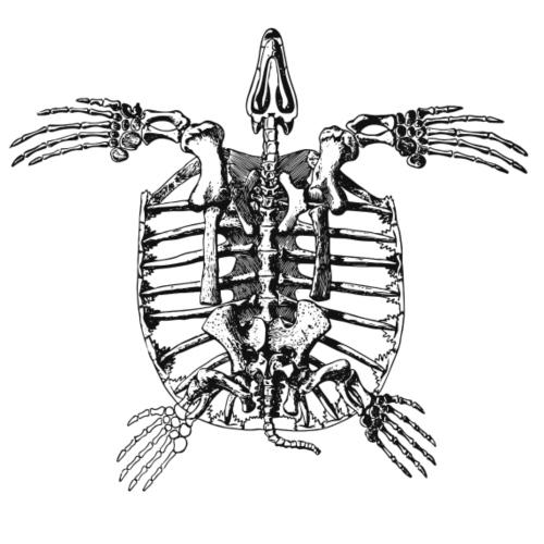 Turtle Skeleton - Männer Premium T-Shirt
