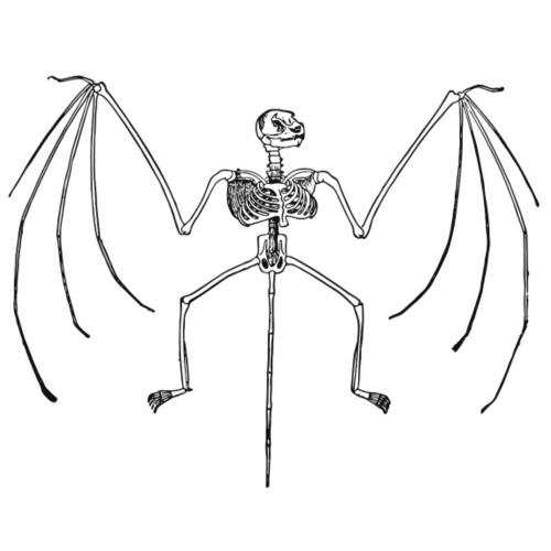 Skelett Fledermaus Flughund - Männer Premium T-Shirt