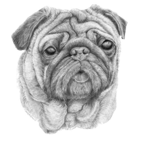 Pug - mops 1 - Herre premium T-shirt