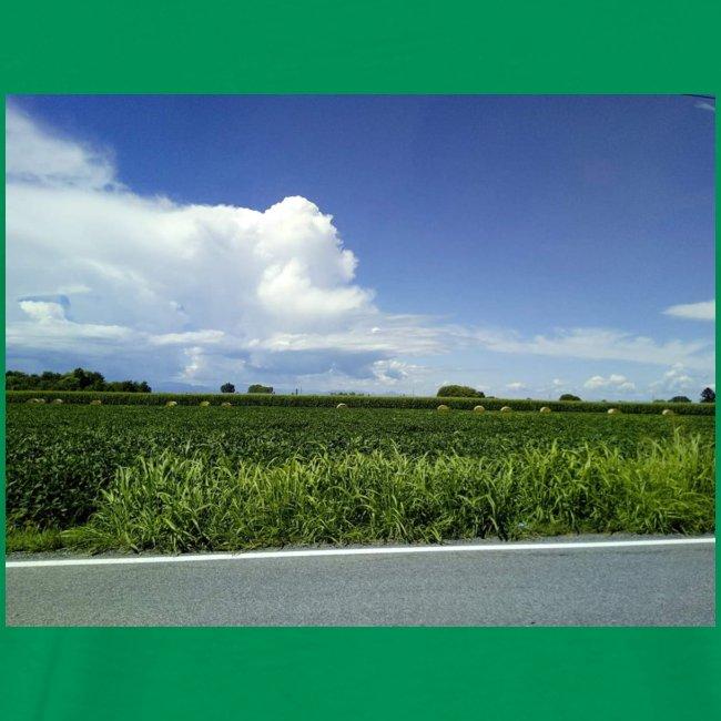 prato verde