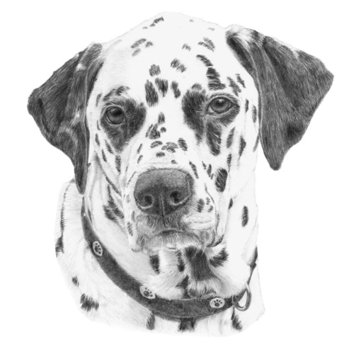 dalmatian - Herre premium T-shirt