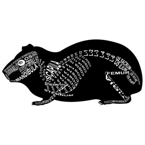 Meerschweinchen-Skelett - Männer Premium T-Shirt