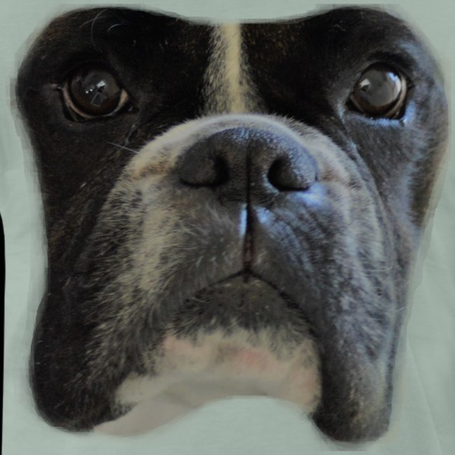 boxer big face