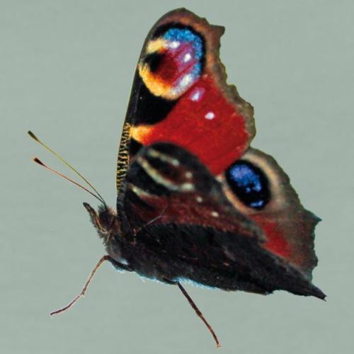 Schmetterling Pfauenauge - Männer Premium T-Shirt