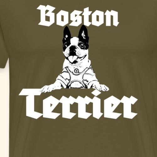 Bosten Terrier, Terrier,kleiner Hund,süßer Hund,
