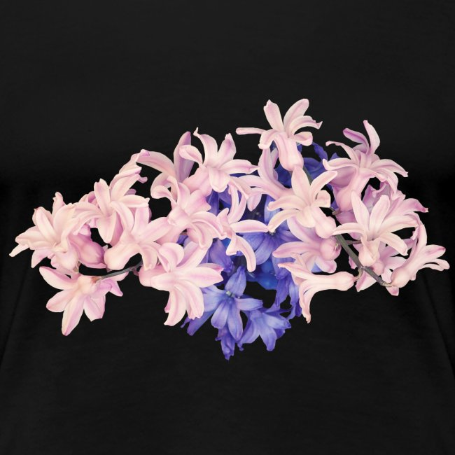 Hyazinthe Frühling Spring