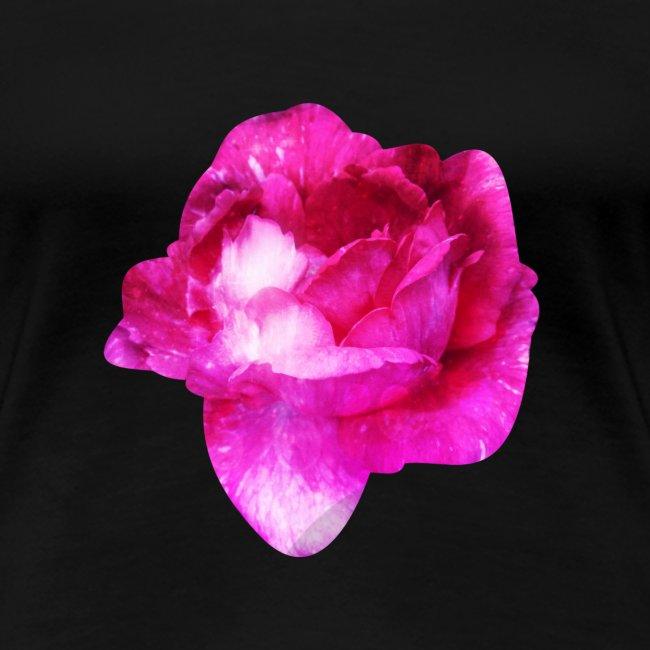 Zauberhafte pinke Rose