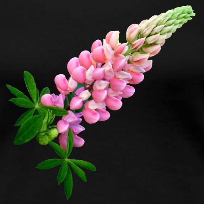 Lupine rosarot Sommer