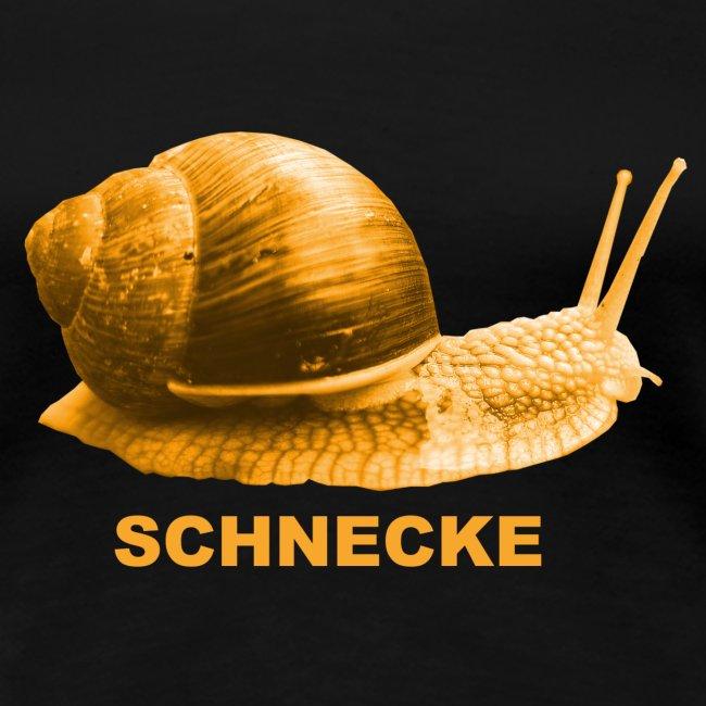 Schnecke Weichtier Weinberg