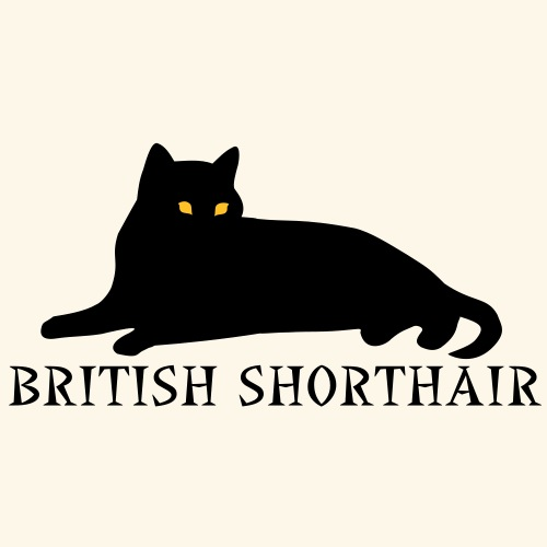 british shorthair liegend