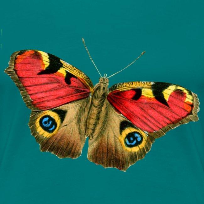Schmetterling Butterfly Frühling Insekt