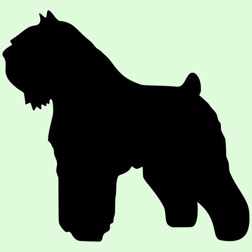Bouvier des Flandres, la silhouette