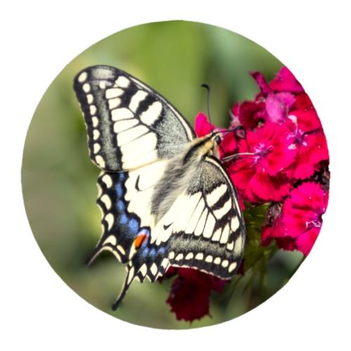 Geschenkidee Schmetterling Foto dezentes Design