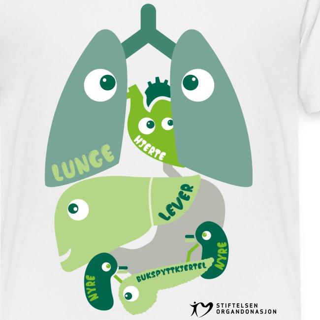Organene