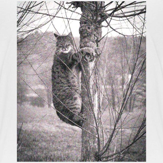 Grumpy Koala Katze im Baum