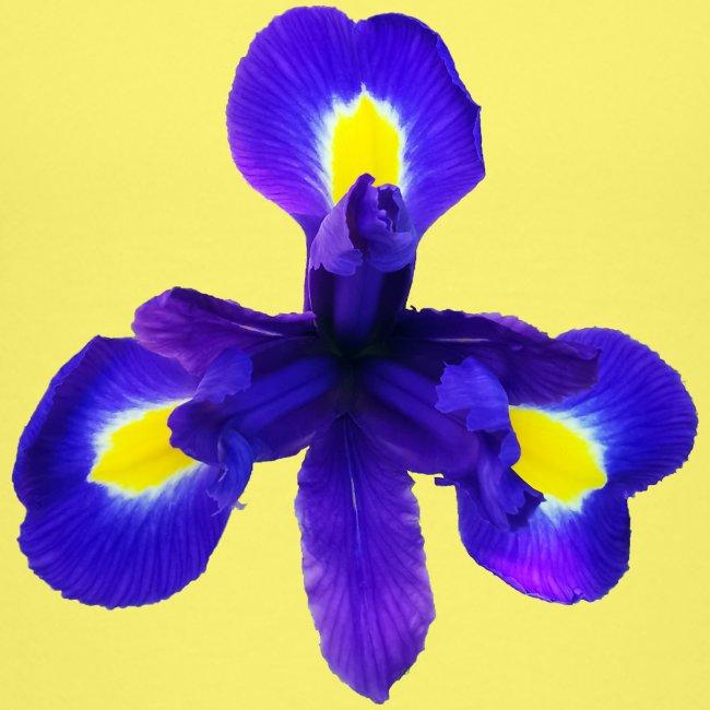 TIAN GREEN Garten - Iris 2020 01
