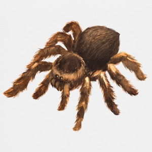Animals · Tiere · Spinne · Tarantula - Teenager Premium T-Shirt