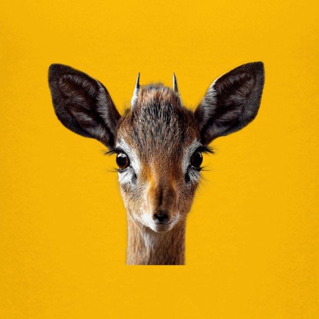 Antilope, Dik