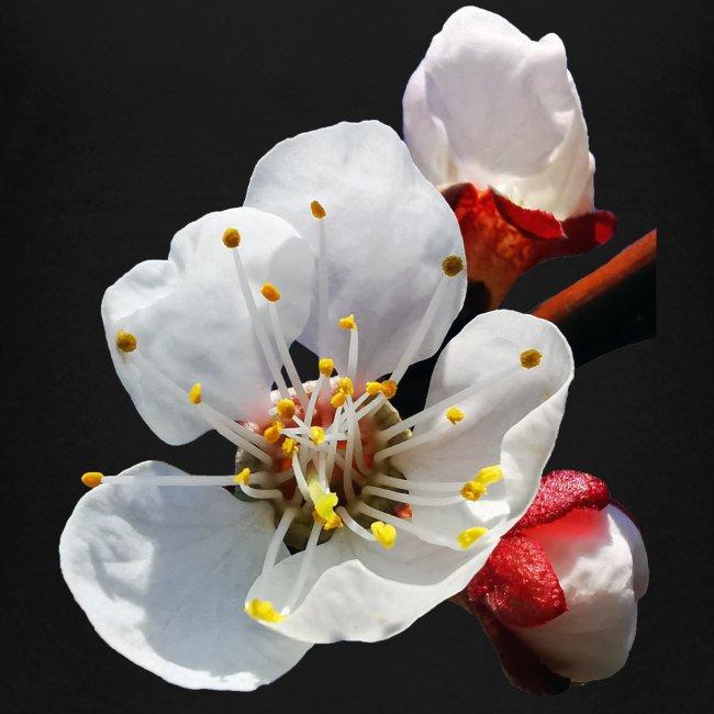 TIAN GREEN Garten - Marillenblüte 2020