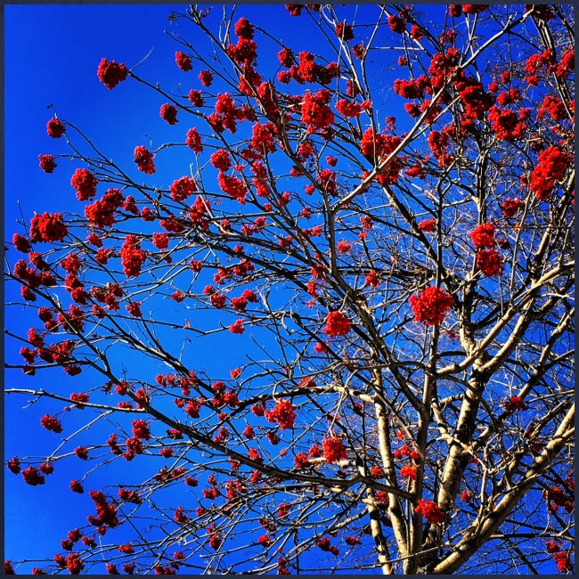 Red Flowers and Blue Sky