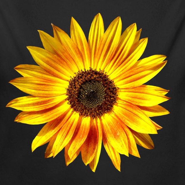 Sonnenblume gelb Sommer
