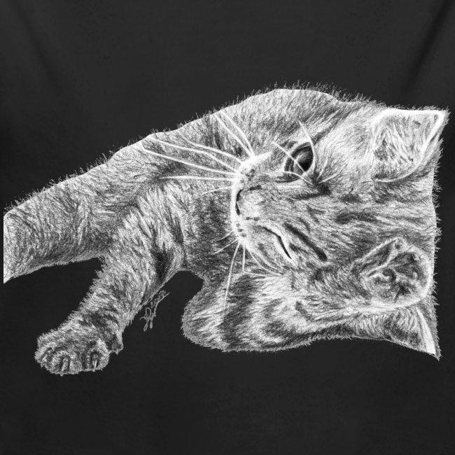 Petit chaton au crayon gris