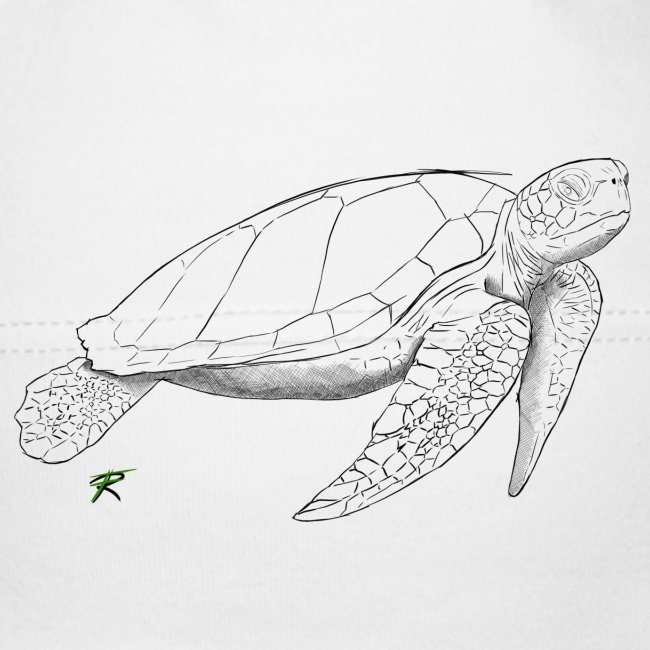 Sea turtle sketch