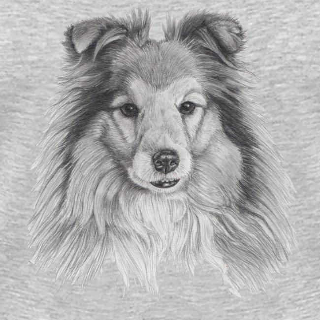 shetland sheepdog sheltie