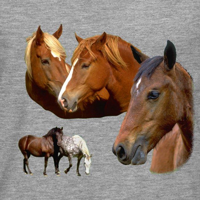 Horses Wild Stallion & Mare Horse and Ponies Head