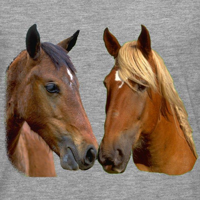 Horses Head Kissing Horses Stallion and Mare head